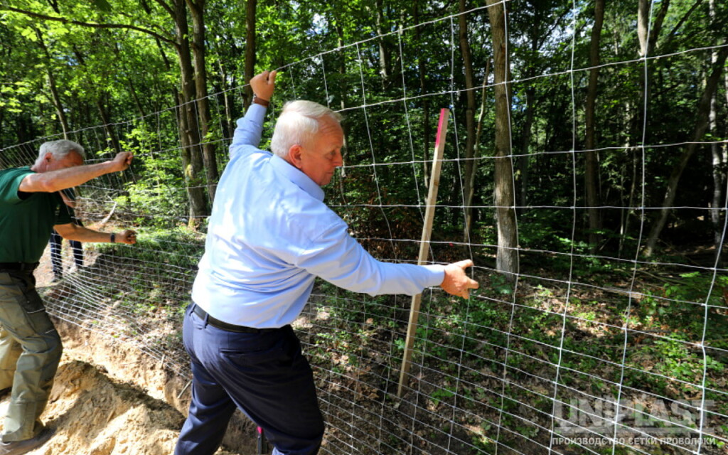 Construction of protective fences against swine fever started